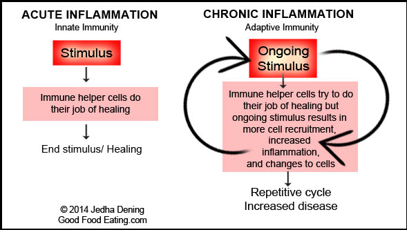 acute-and-chronic-inflammation1
