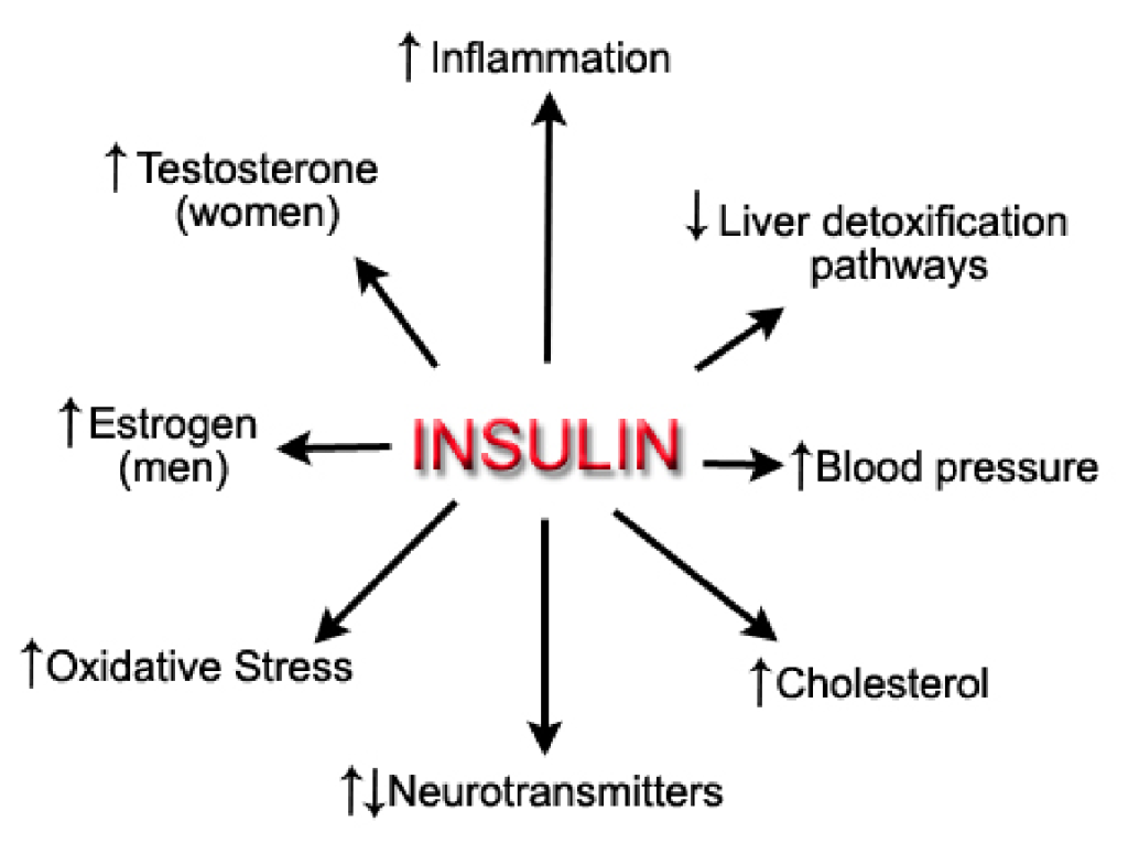 insulin-effects-dr-hagmeyer